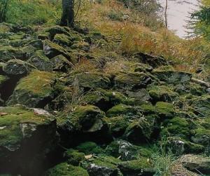 Přírodní památka Homolka