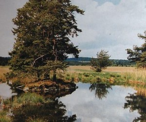 Mokřady pod Vlčkem