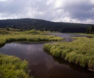 přítok do Flájské přehrady