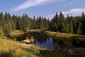 rybníček u Weitersglashütte