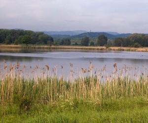 Vinařský rybník