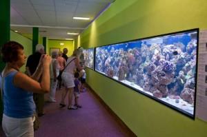 Meeres aquarium