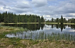 Bezejmenný rybník